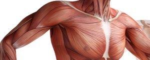 calcio ossa tendini spalla